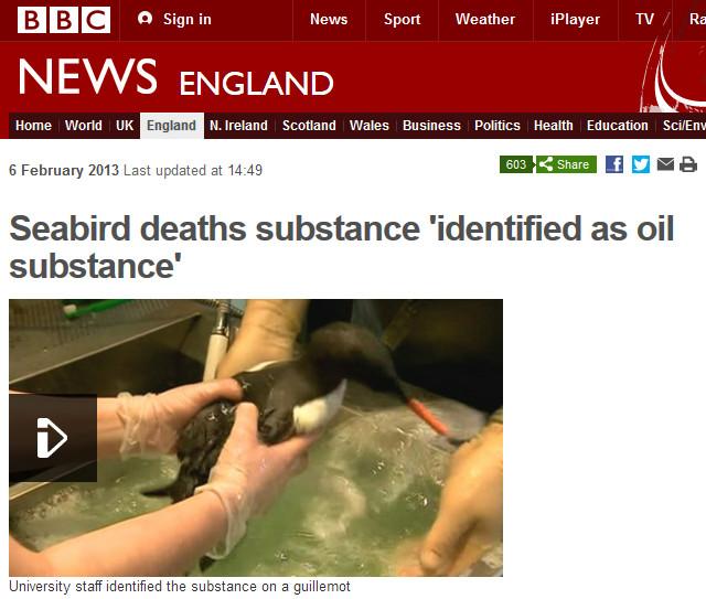 Seabird deaths substance 'identified as oil substance'
